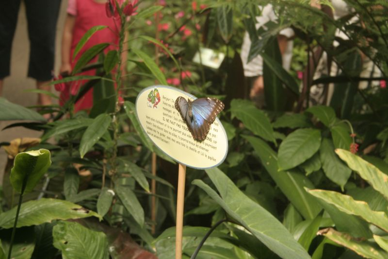 jardinaupapillons006.jpg