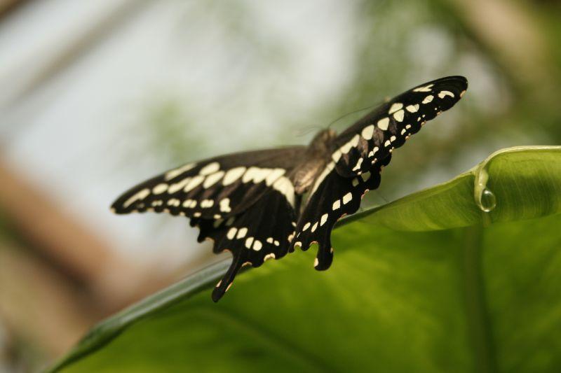 jardinaupapillons014.jpg