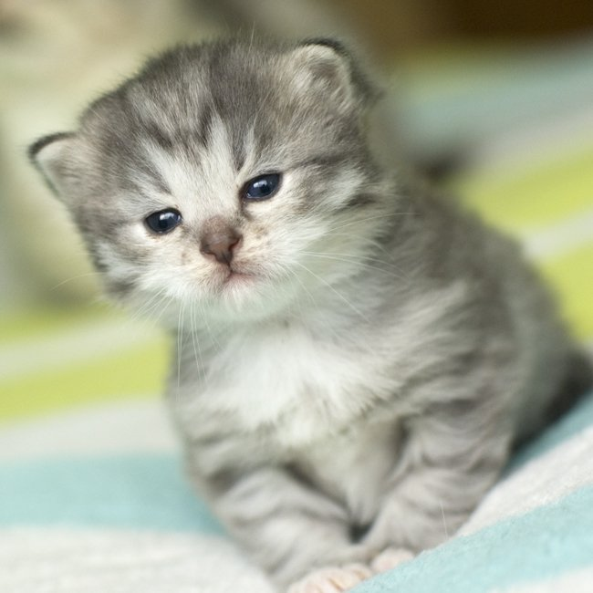 gatos bonitos related keywords - photo #16