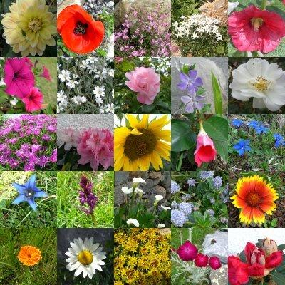 Se familiariser avec les fleurs l autre ouverture for Catalogue fleurs de jardin